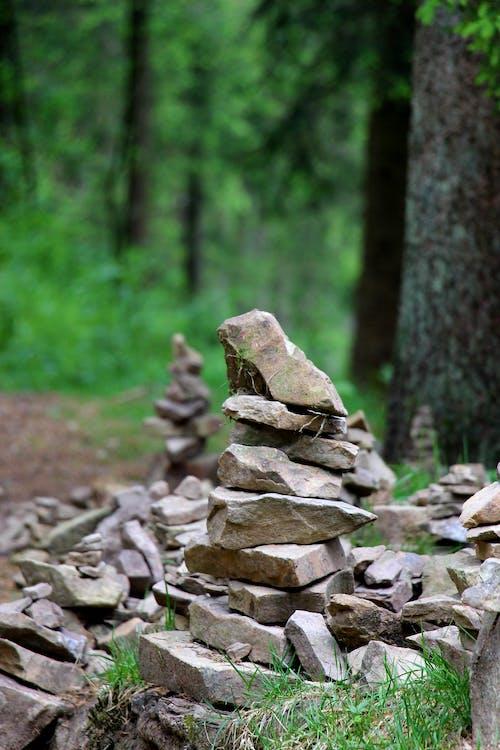 Ingyenes stockfotó fa, kavicsok egyensúlyozása, kövek, köves sziklák témában