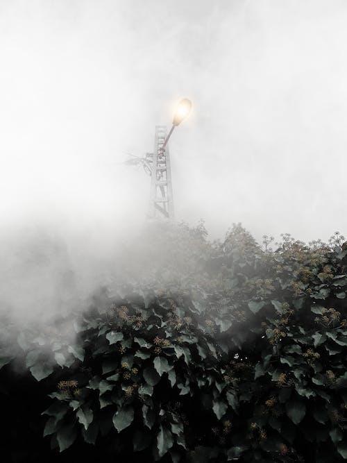 街灯柱, 霧, 霧が多いの無料の写真素材
