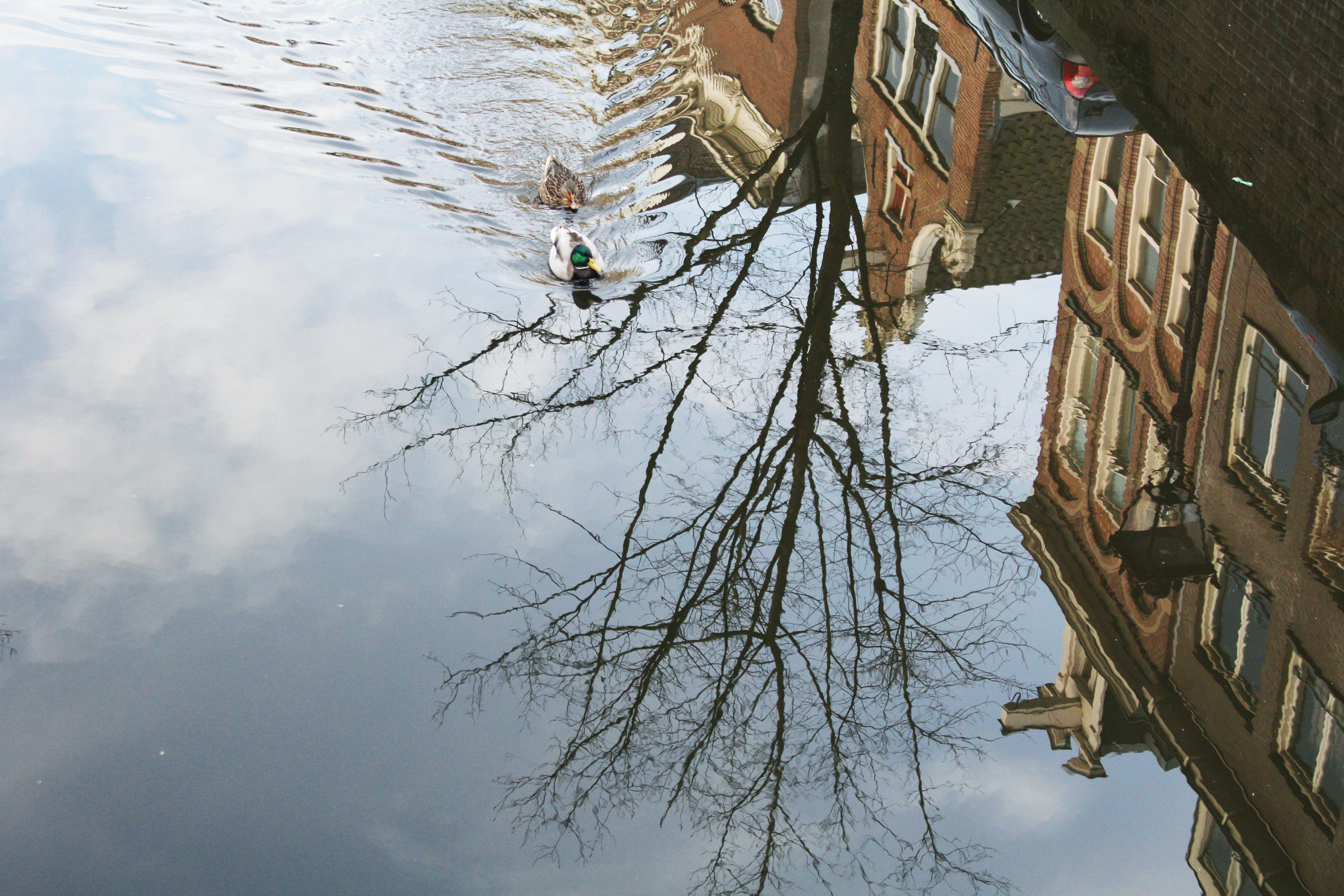 Free stock photo of amsterdam, autumm, city, color