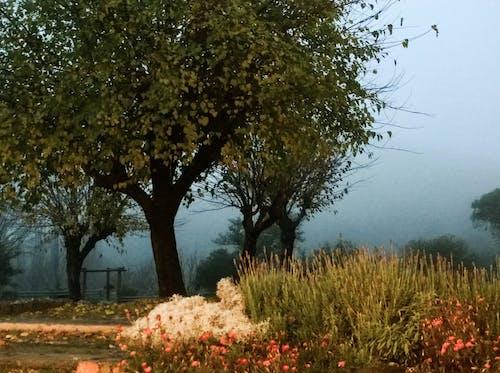 Gratis lagerfoto af landskab, natur, t¨åge