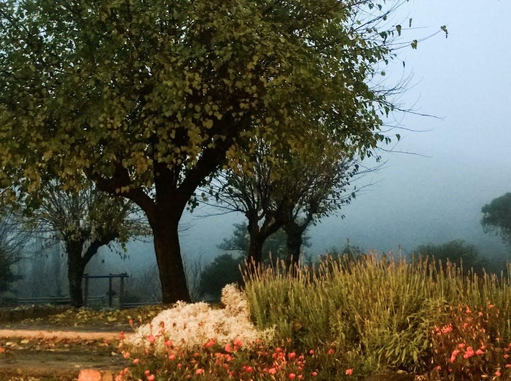 baum, landschaft, natur