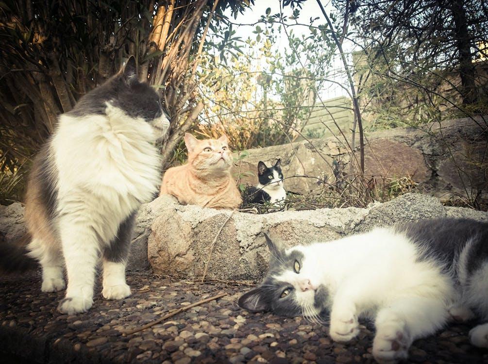 haustier, katzen, liebe