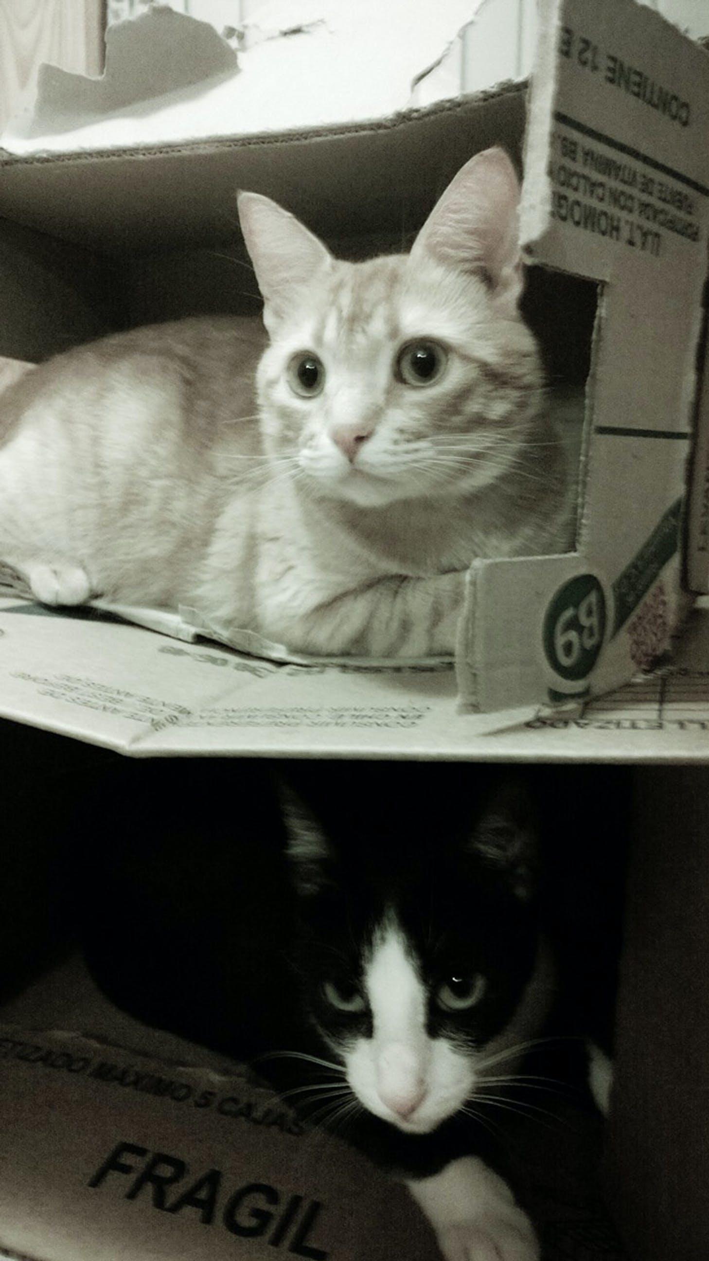 Free stock photo of box, cat, contrast, love