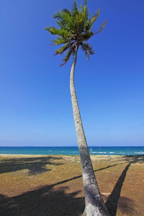 ağaç, deniz, deniz kıyısı, deniz manzarası içeren Ücretsiz stok fotoğraf