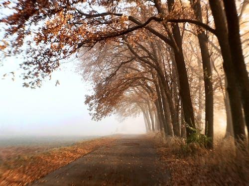 Gratis stockfoto met gevallen bladeren, huawei, natuurzicht, zonsopkomst