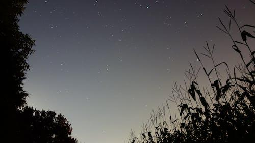 Foto d'estoc gratuïta de Alemanya, camps, cel, estrelles