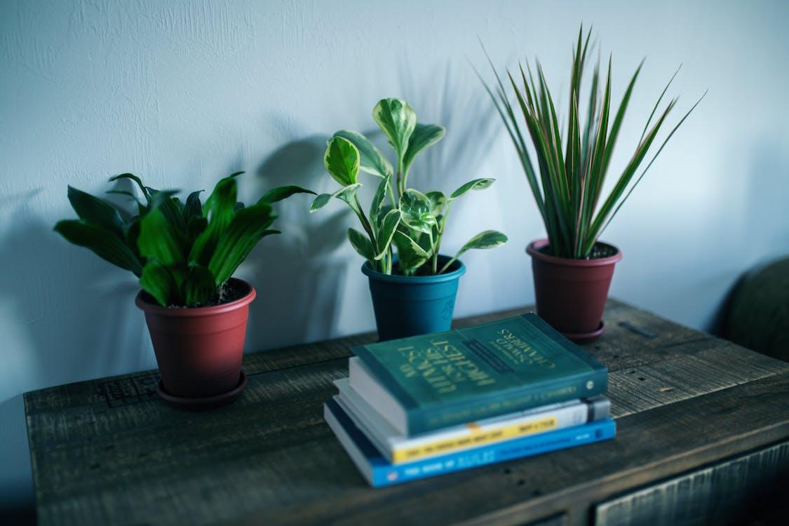 ahşap masa, bitkiler, büyüme