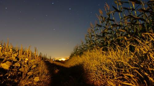 Foto d'estoc gratuïta de Alemanya, camps, estrelles, nit