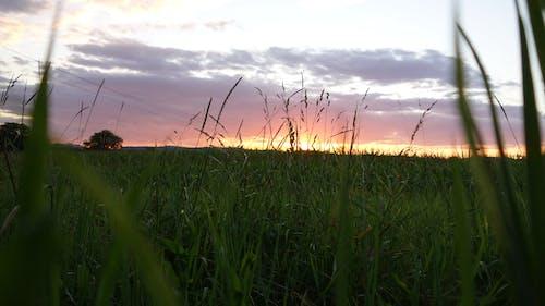 Foto d'estoc gratuïta de Alemanya, camp, capvespre, posta de sol