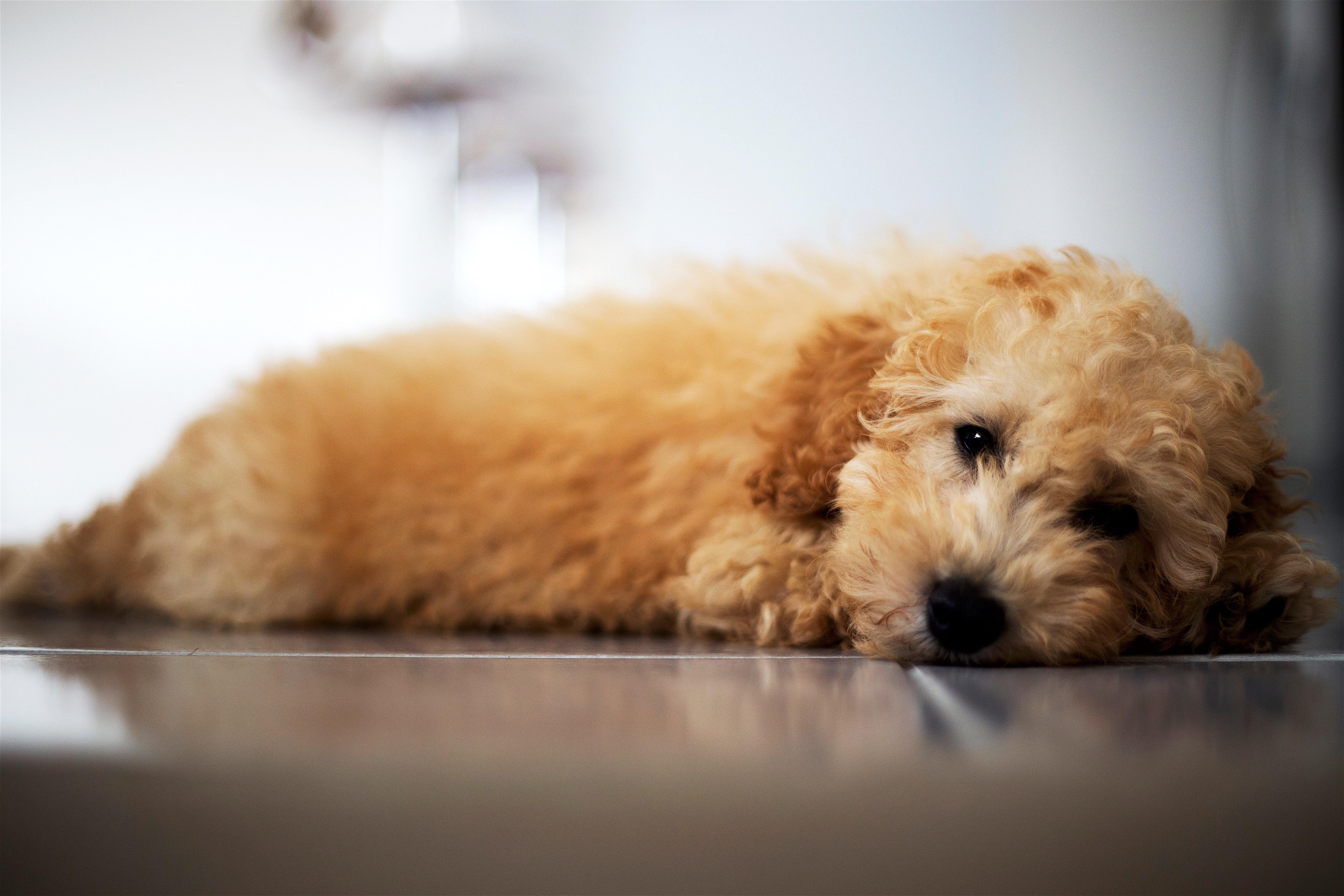 Foto Stok Gratis Tentang Anak Anjing Anak Anjing Yang Lucu