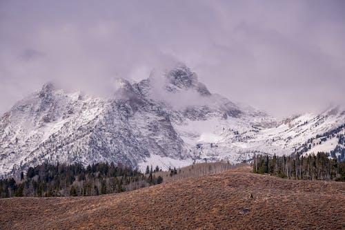 下雪的, 天性, 日光, 景觀 的 免费素材照片
