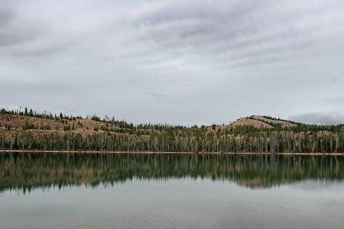 Wald In Der Nähe Von Gewässern