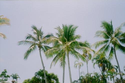 低角度拍攝, 夏天, 夏季, 天堂 的 免費圖庫相片