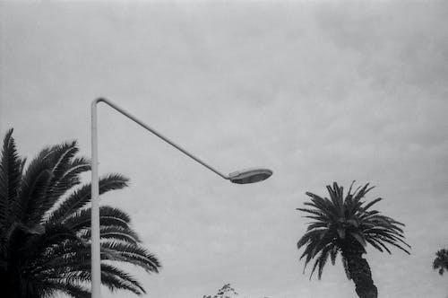 Đèn đường Trắng