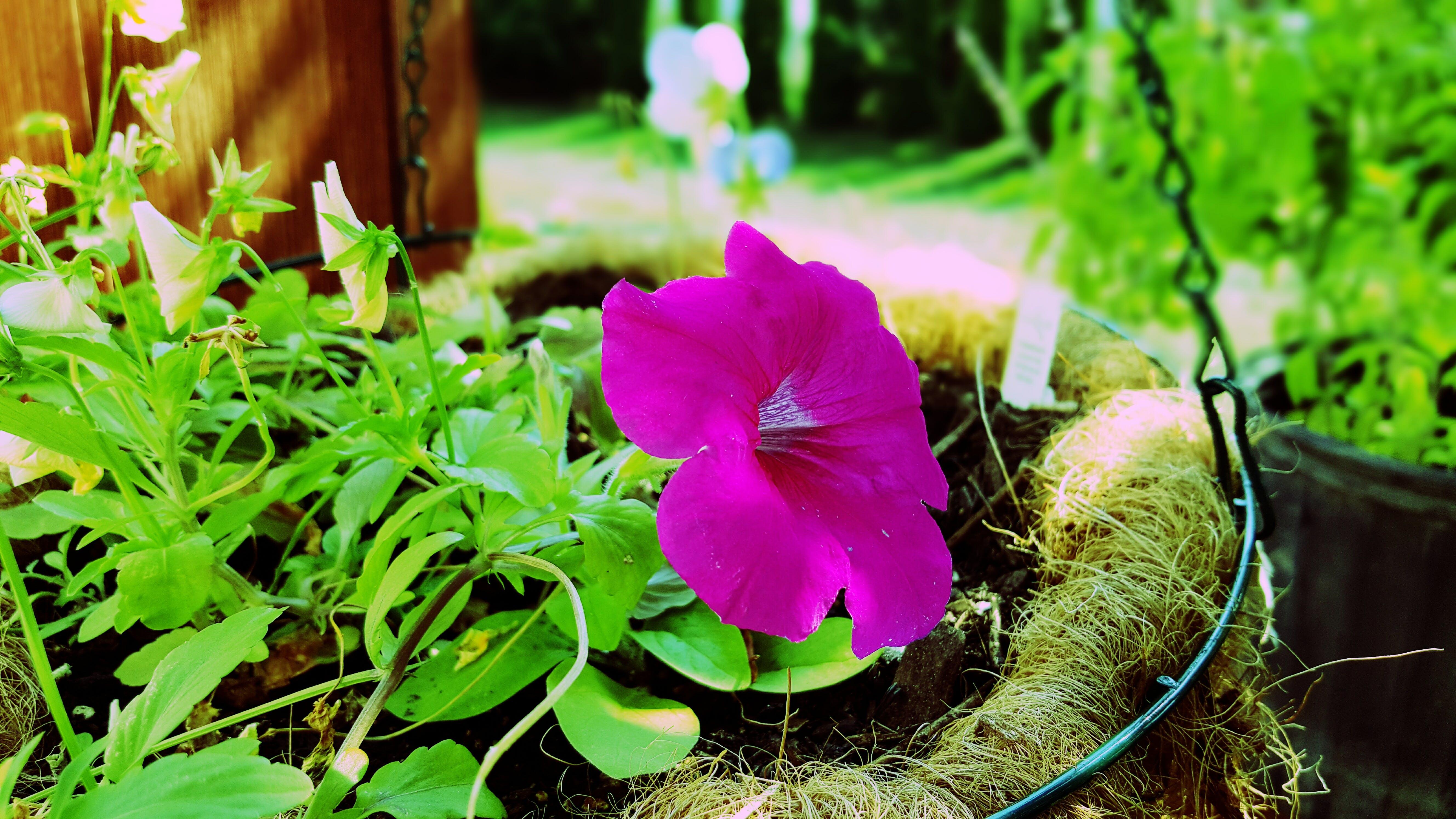Free stock photo of beautiful flowers, flower, green, nature