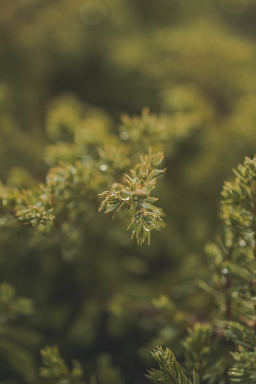Foto d'estoc gratuïta de creixement, macro, planta, verd