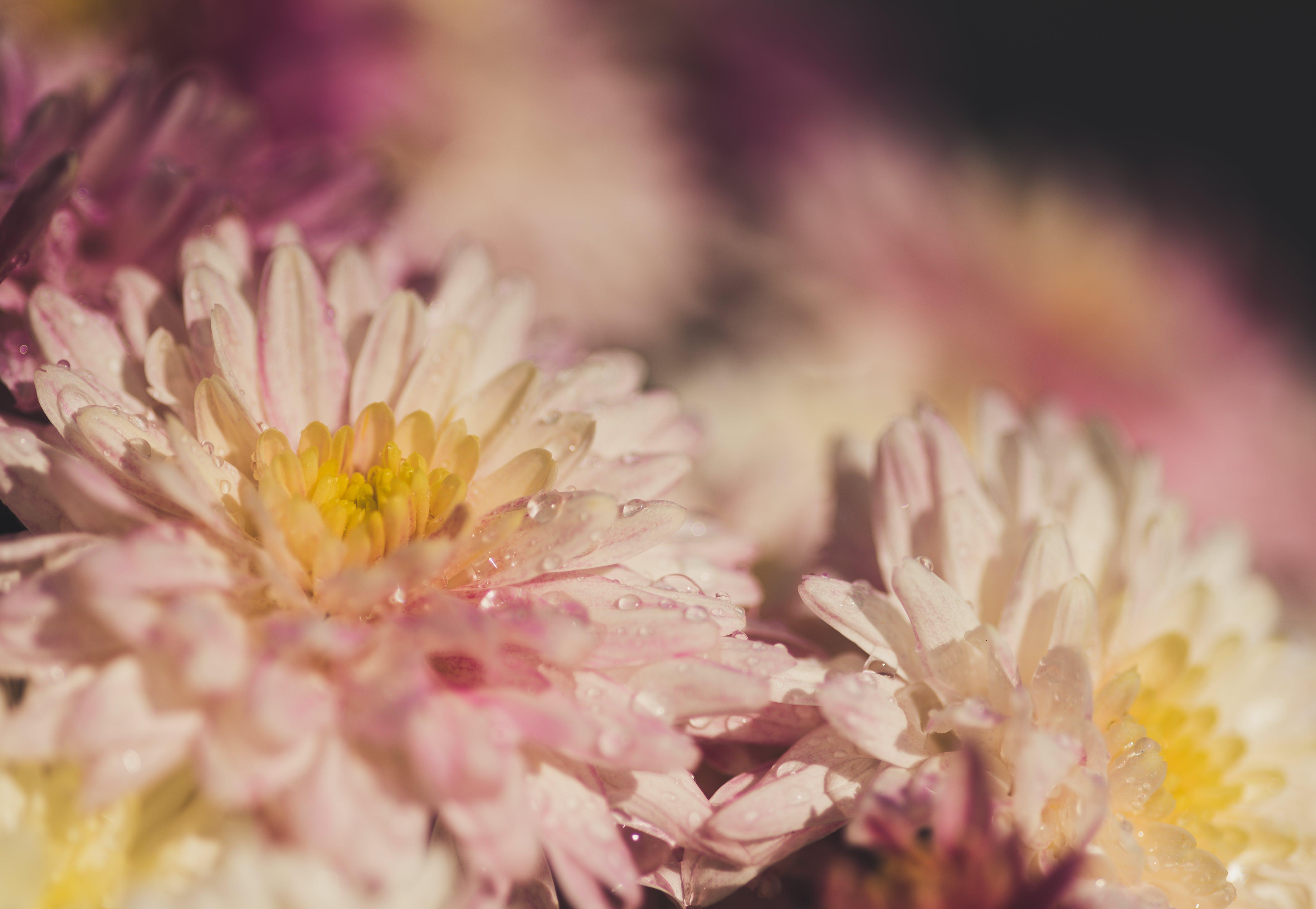 Free stock photo of colorful, flower, macro, macro photography