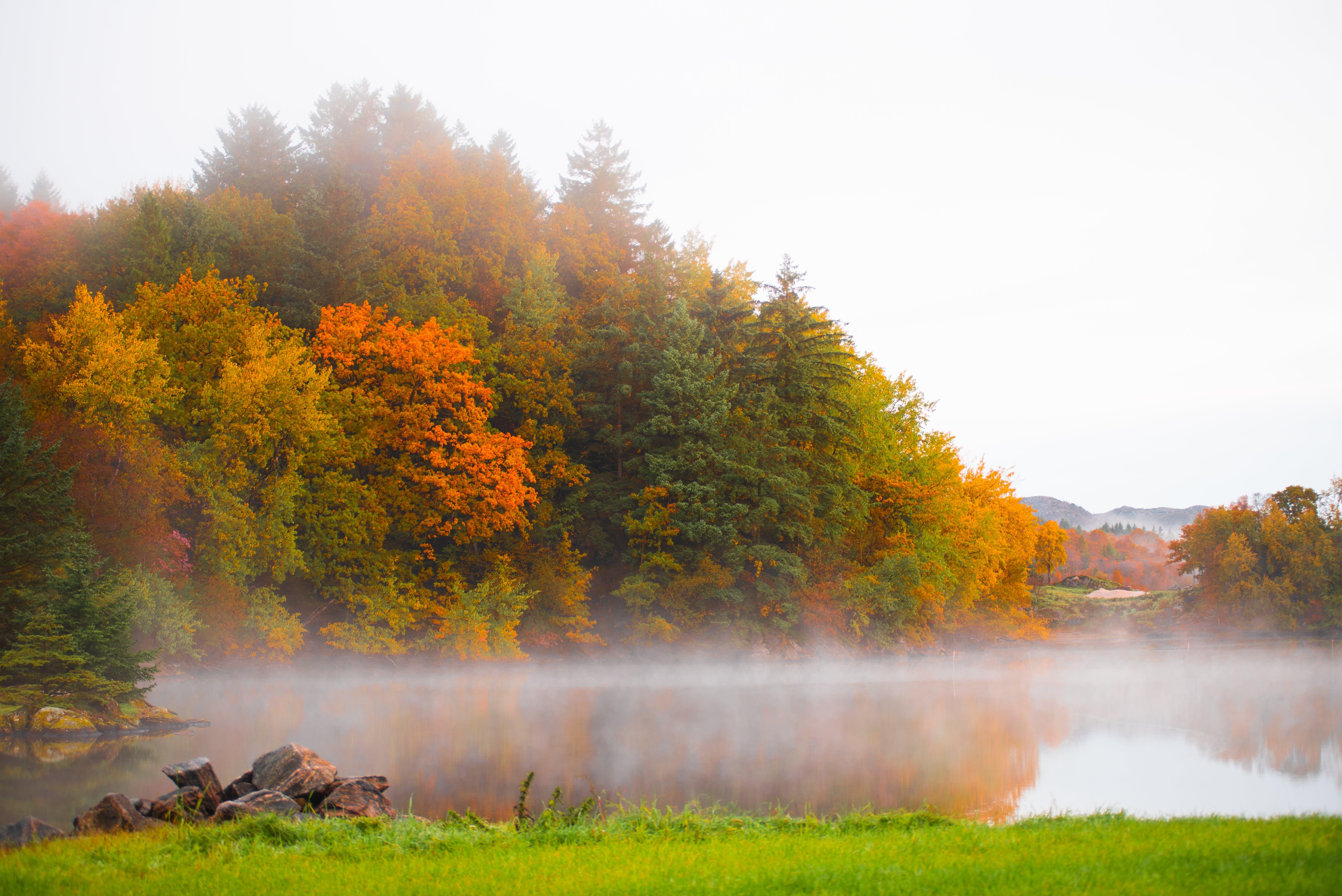 Free stock photo of autumn, autumn colors, fog, foggy morning