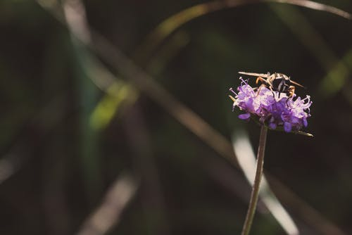 Selective Focus Photography Of Insect Perched On Purple Flower