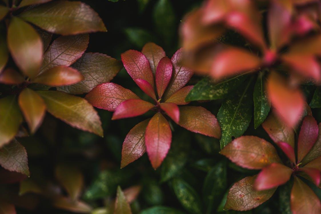 HD-обои, глубина резкости, листва
