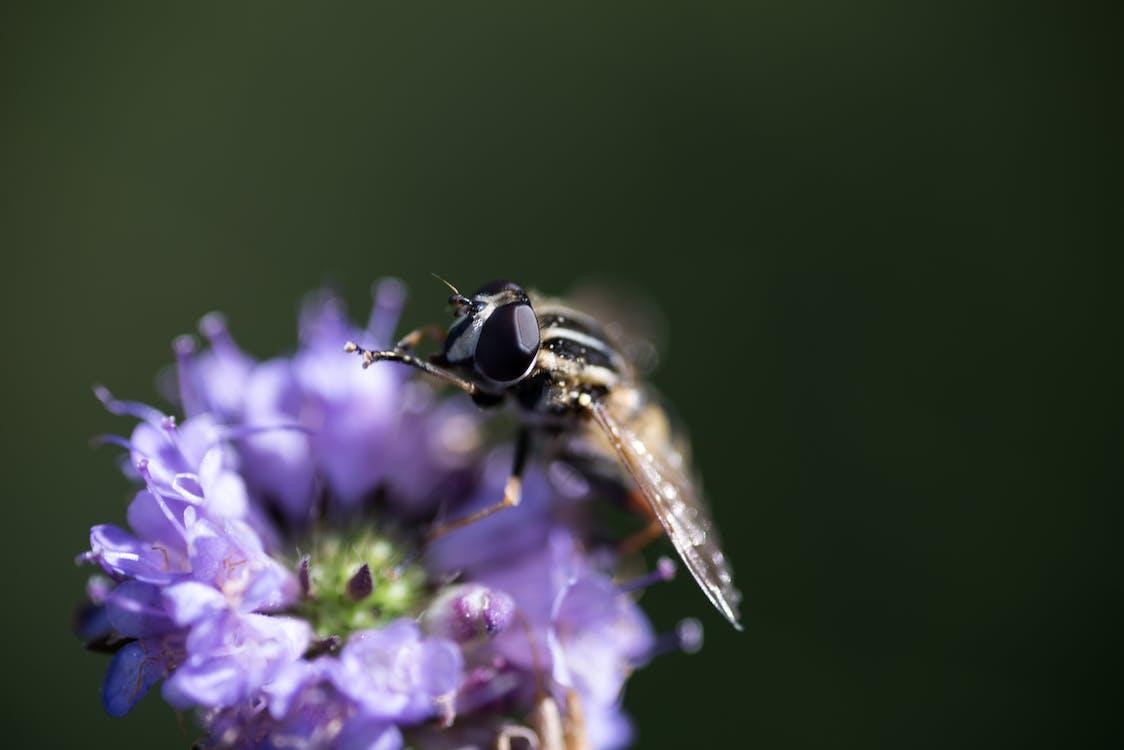 fleur, insecte, insectes