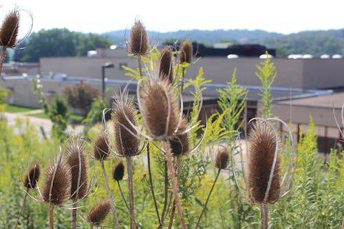 Imagine de stoc gratuită din brun, colorat, fără filtru, flori