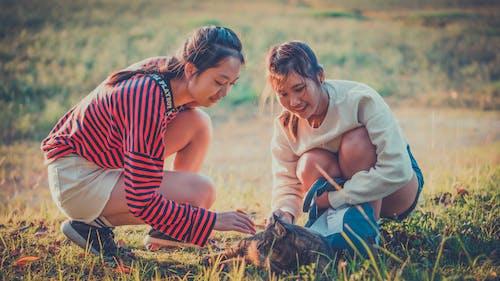 Foto d'estoc gratuïta de a la gatzoneta, acariciant, amant dels animals, camp d'herba