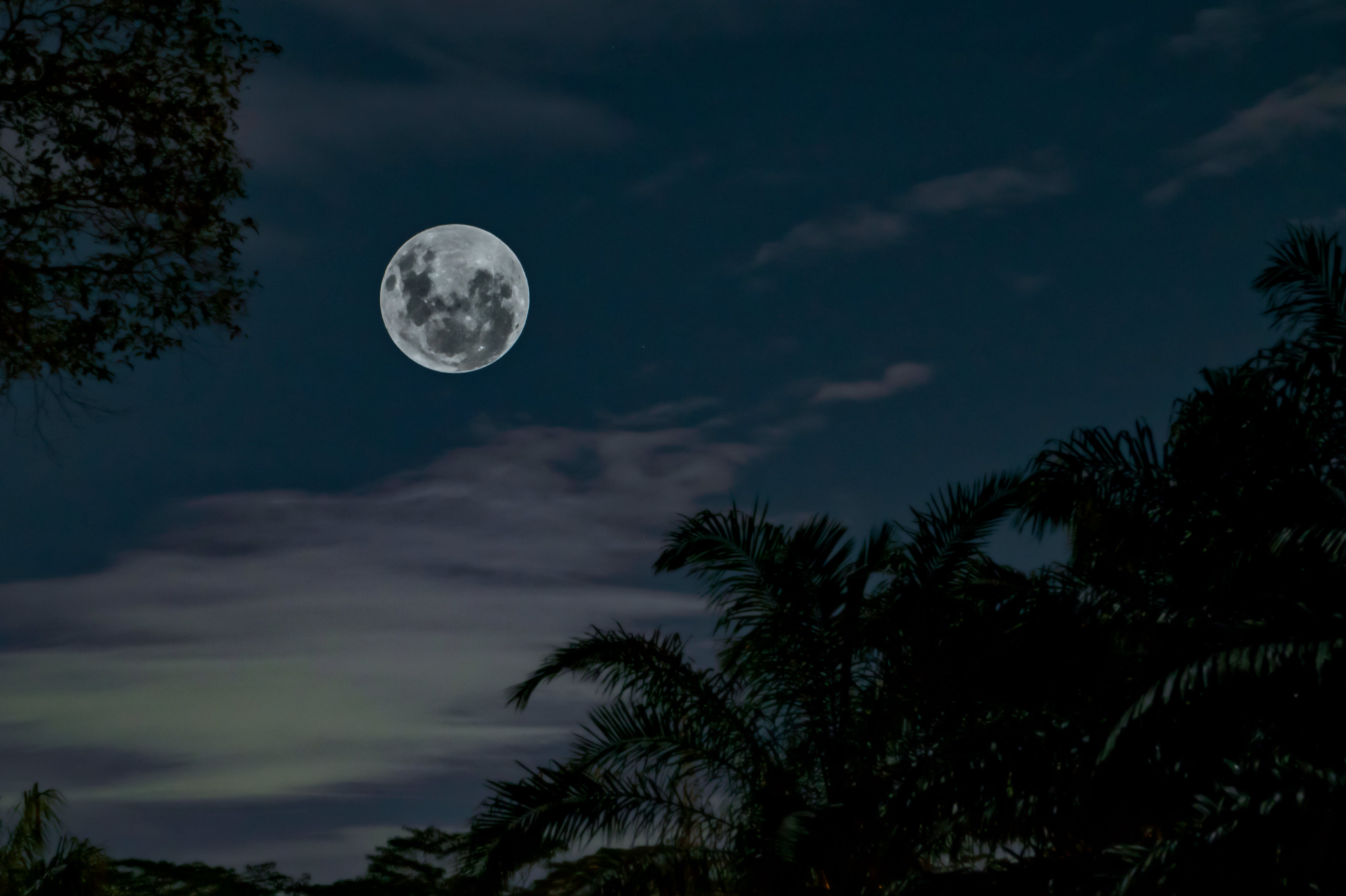 Low Angle Photography of Full Moon Under Silhouette of Tall Trees