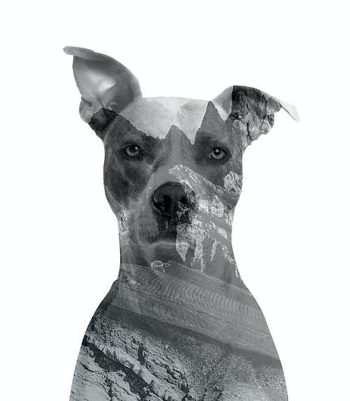 Ilmainen kuvapankkikuva tunnisteilla 4k taustakuva, kaksinkertainen, koira, mustavalkoinen