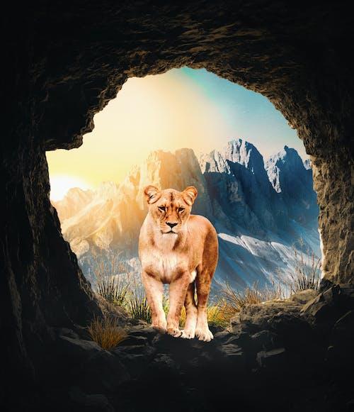 Ilmainen kuvapankkikuva tunnisteilla 4k taustakuva, aurinko, kevyt, leijona