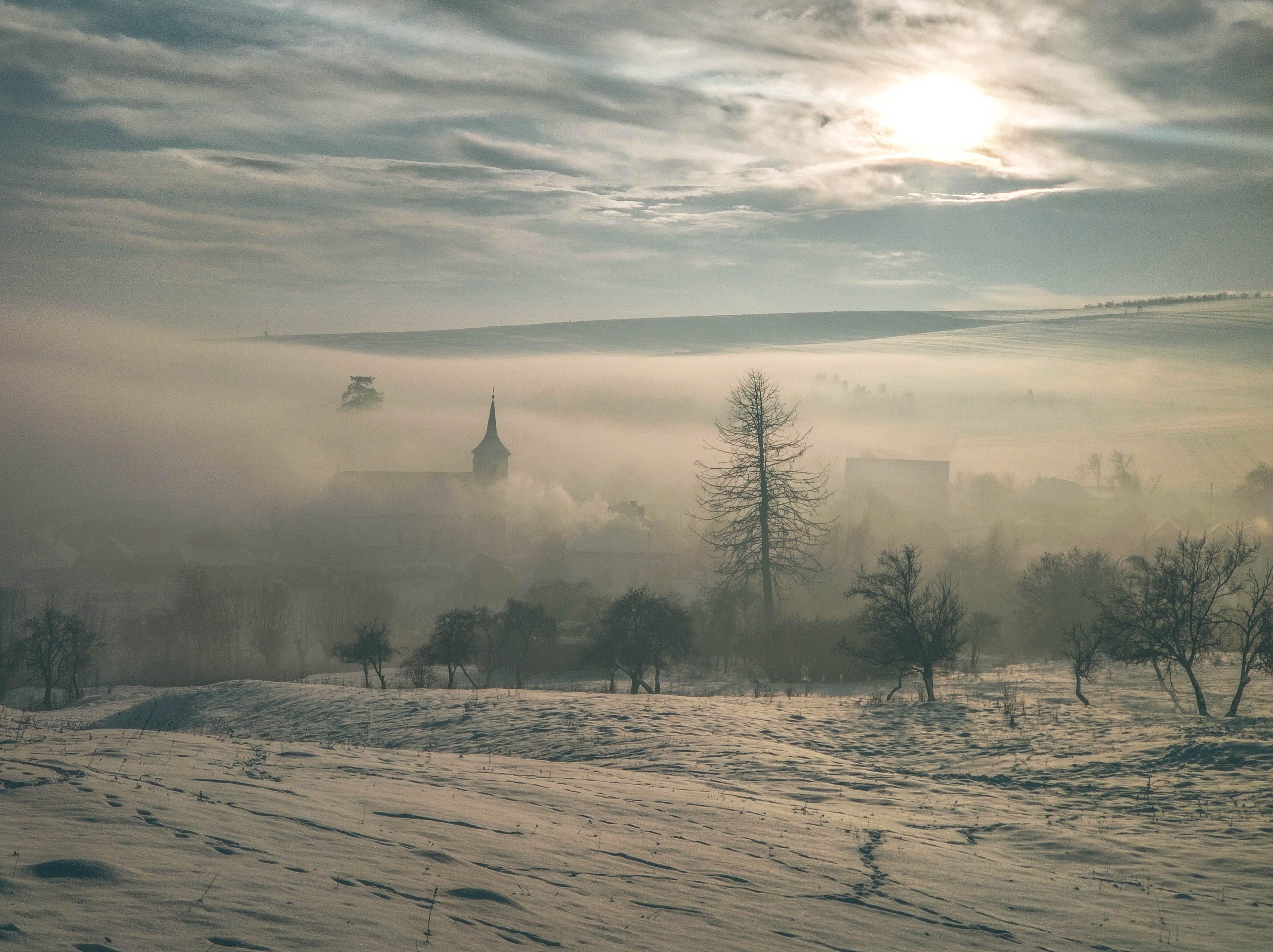 Free stock photo of church, cold, fog, pine tree