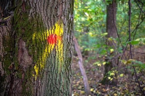 Photos gratuites de bois, chemin, flèche