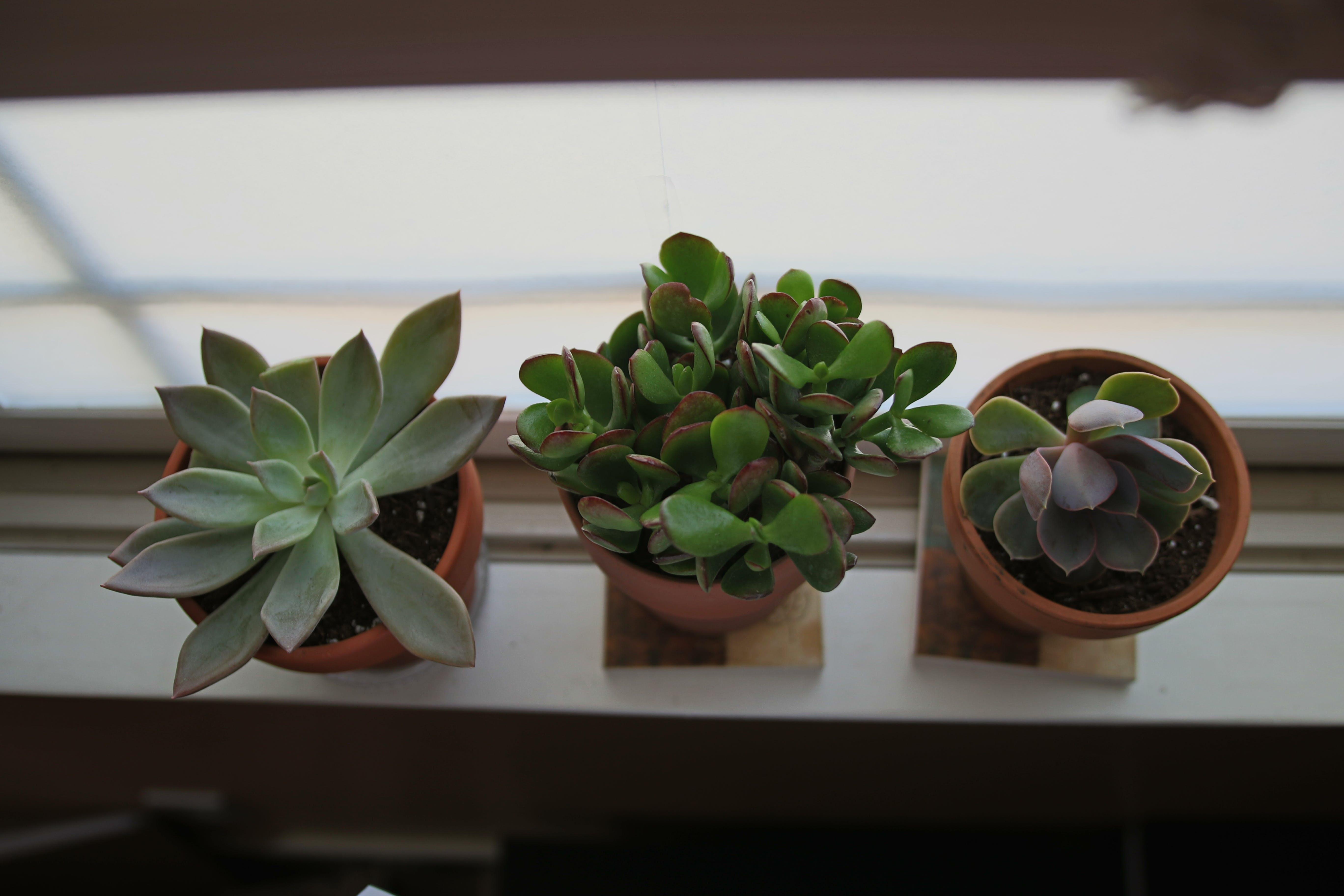 Free stock photo of green, minimal, plant, succulent