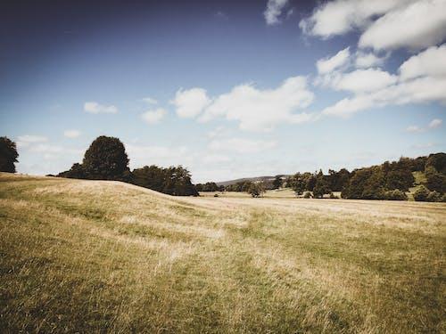 Ingyenes stockfotó Anglia, Egyesült királyság, fű, legelő témában