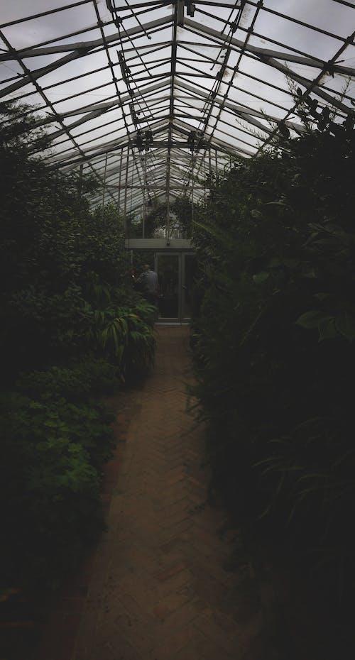 Immagine gratuita di conservatorio, giardino, impianti