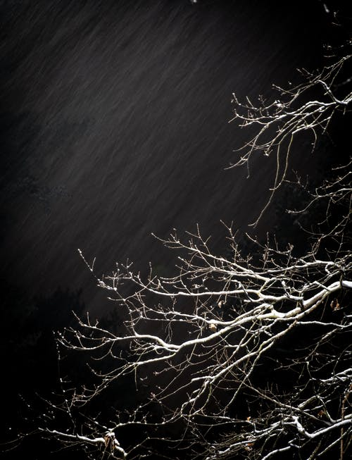 ağaç, akşam, büyüme, çevre içeren Ücretsiz stok fotoğraf
