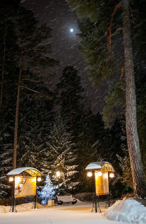 Kostnadsfri bild av bänk, berg, frost, frostig