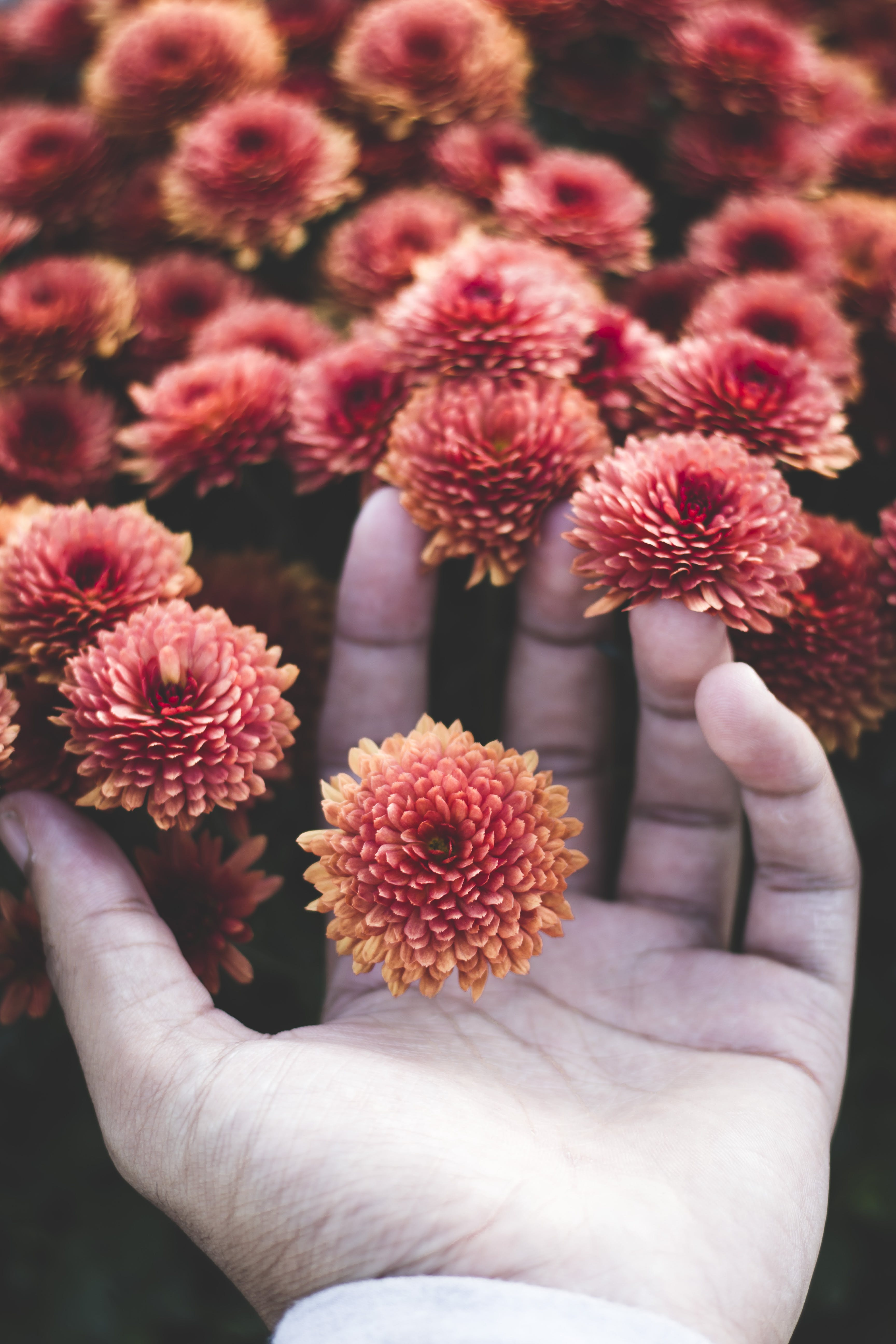 Photo of Person Holding Flowers