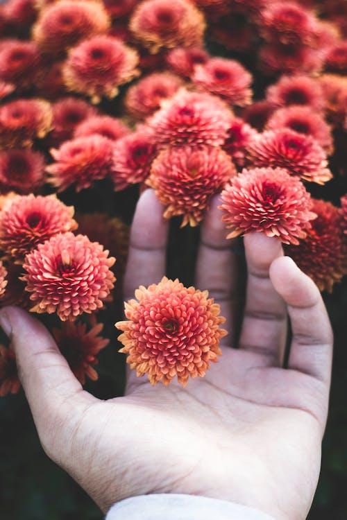 dotýkání, flóra, hloubka ostrosti