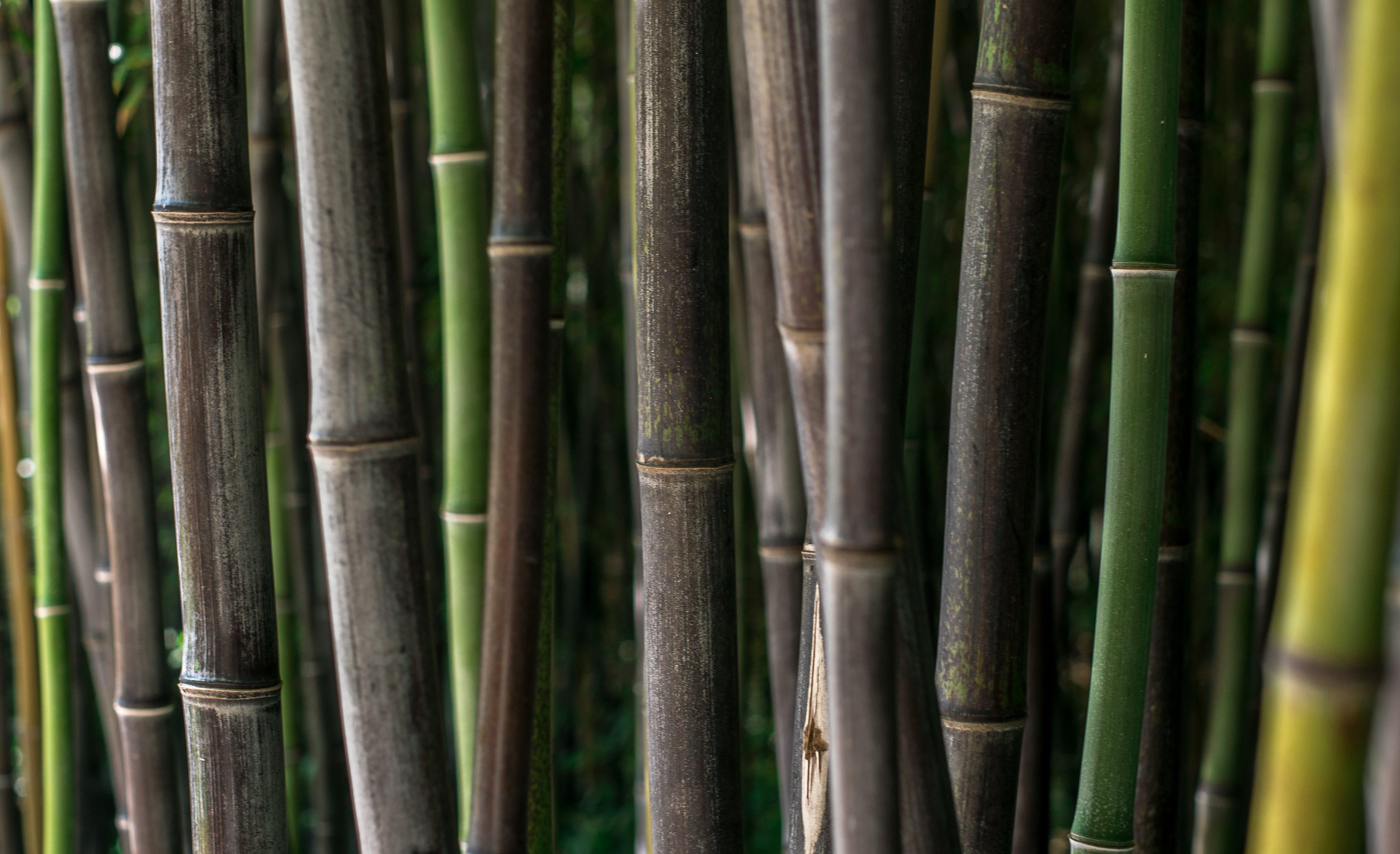 Free stock photo of backround, green, lockscreen wallpaper, meditation