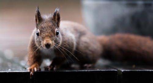 Ingyenes stockfotó mókus esőben témában