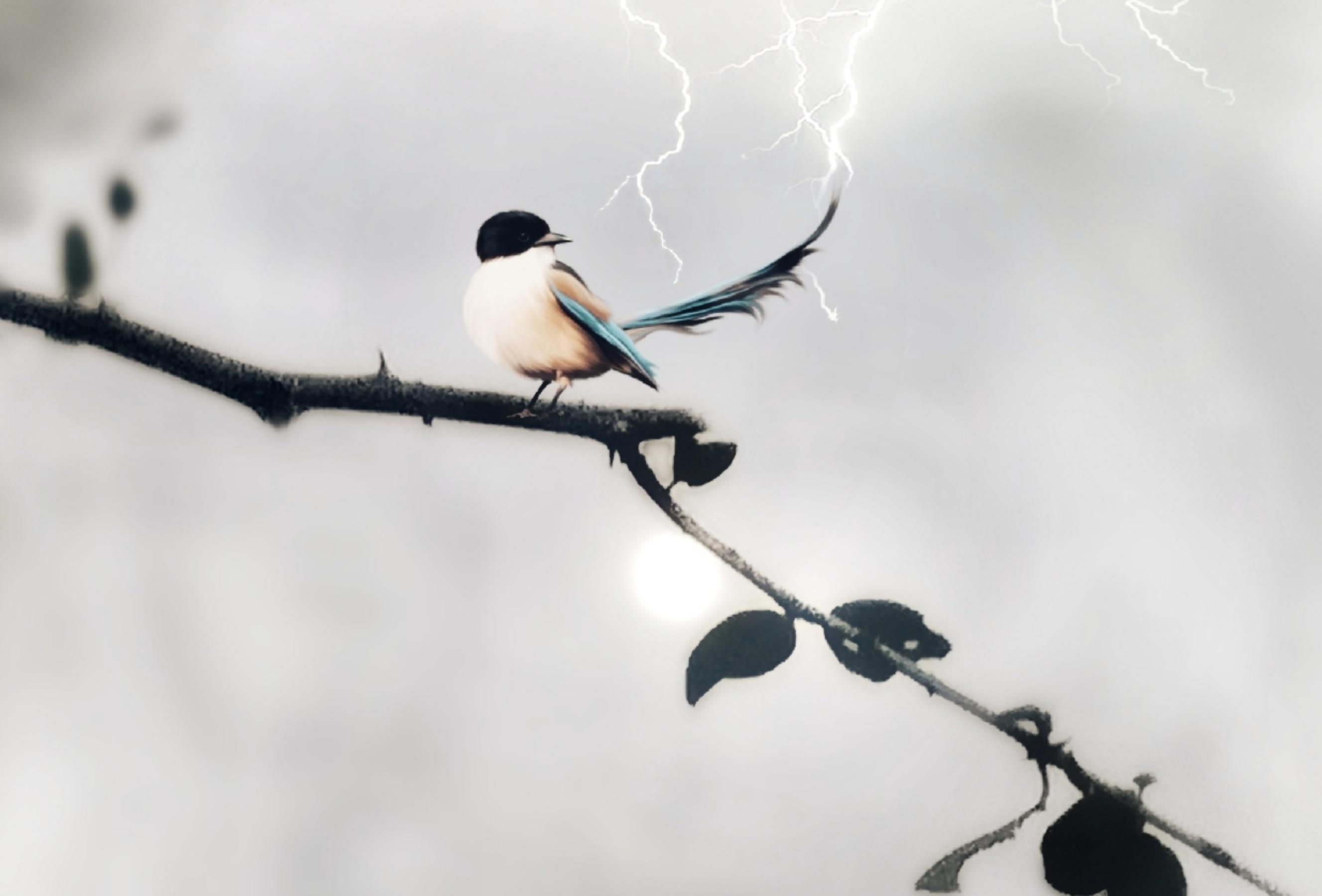 πραγματικό μεγάλο πουλί εικόνες άνδρες πιπιλίζουν μεγάλες πούτσες