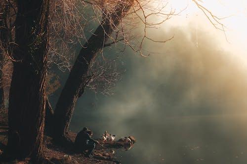 Immagine gratuita di acqua, alberi, ambiente, anatre