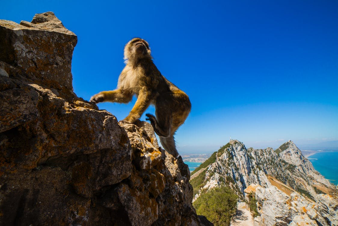 ape, apekatt, fjell