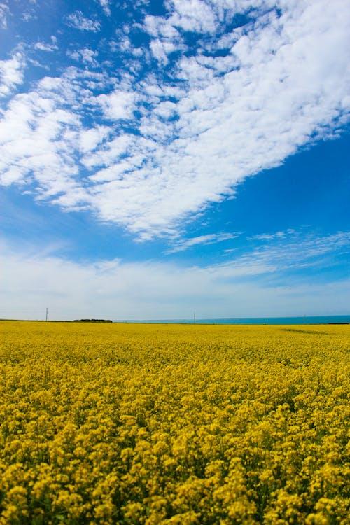 Foto d'estoc gratuïta de cel blau, cel clar, cel màgic, flor de violació