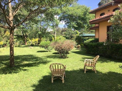 椅子, 花園 的 免费素材照片