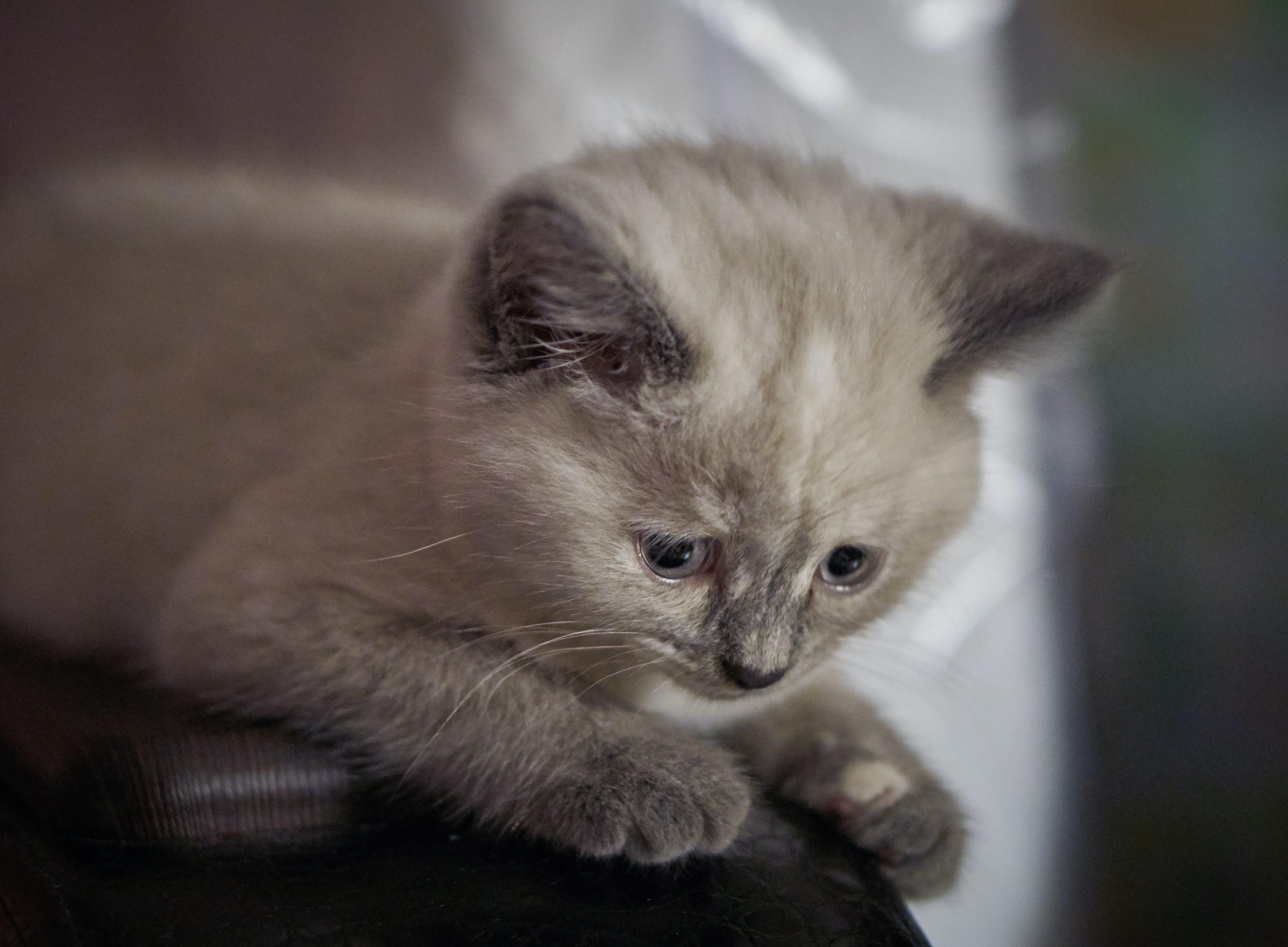Free stock photo of animal, cat, kitty, the beast