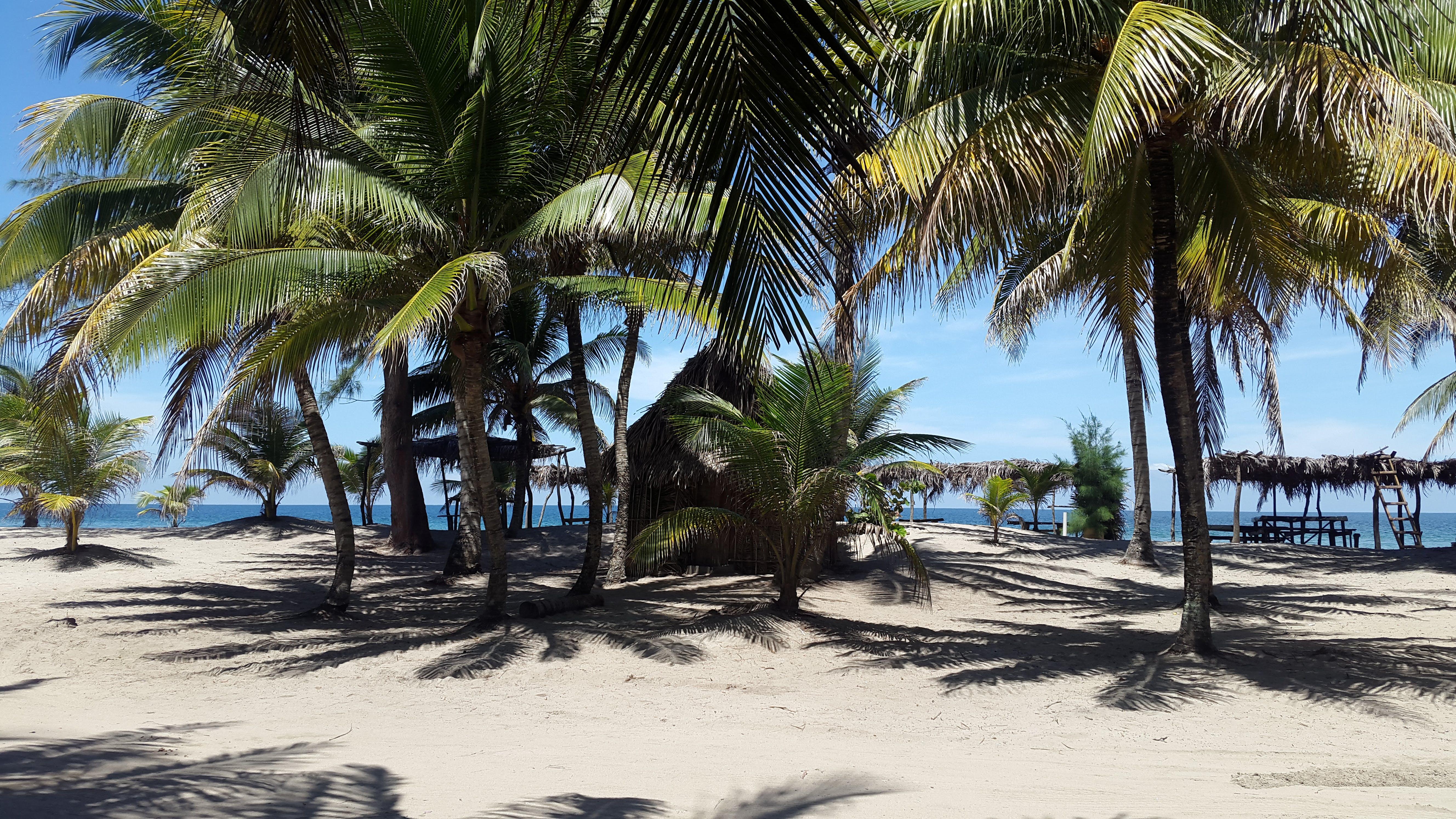 Free stock photo of beach break, honduras, palms, sand