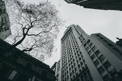Безкоштовне стокове фото на тему «Windows, архітектура, архітектурне проектування, будівлі»