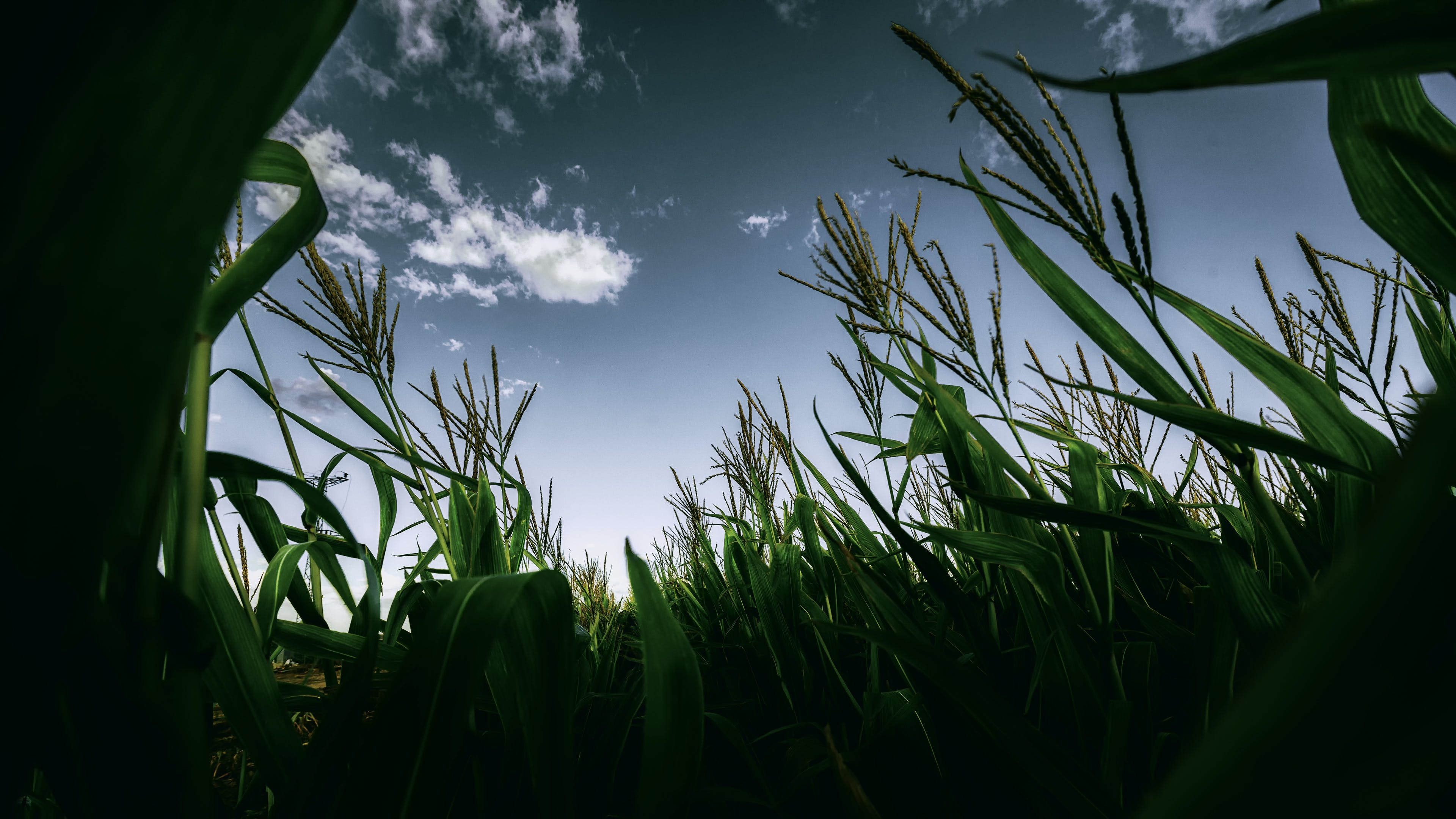 Silhouette Photography of Green Crops
